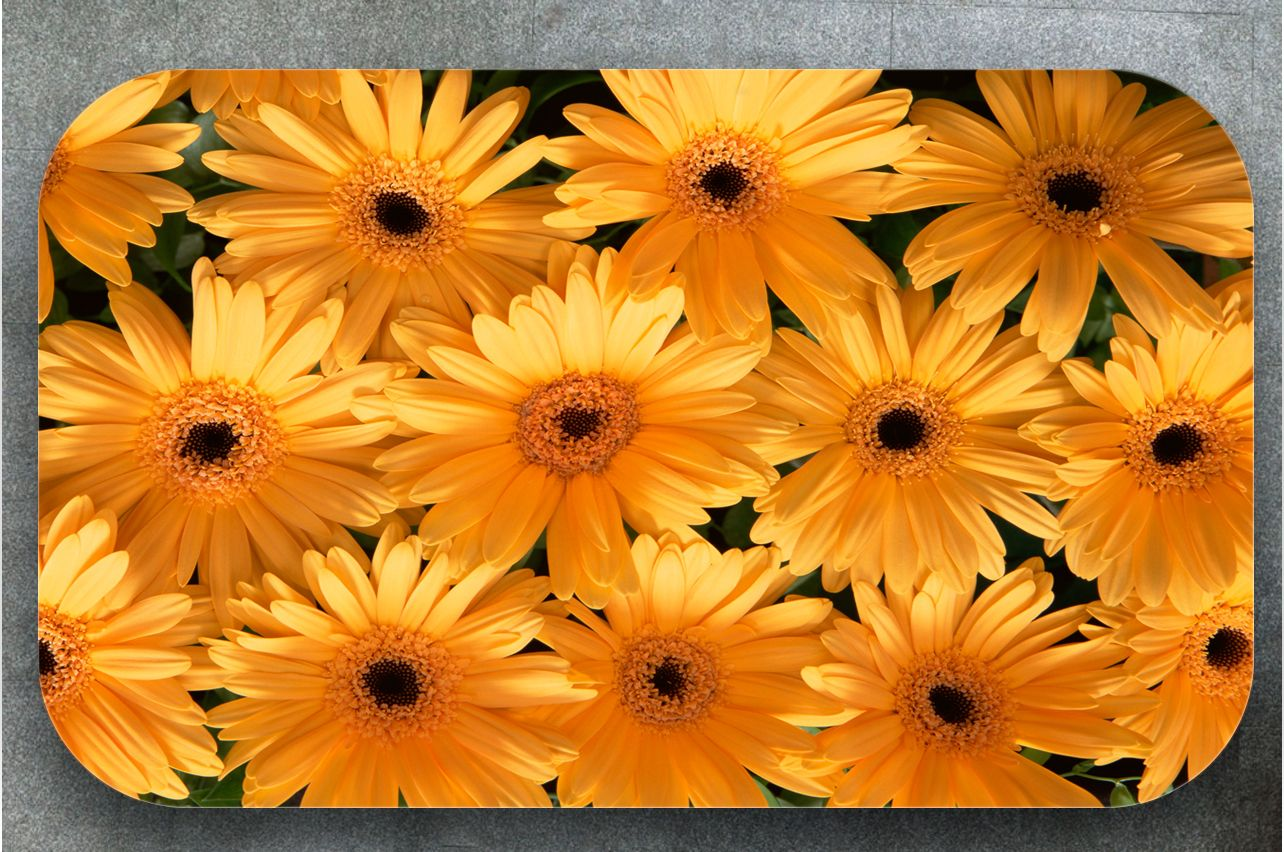 Table Decals - Gerberas | Buy Table Decals in x-decor.comи