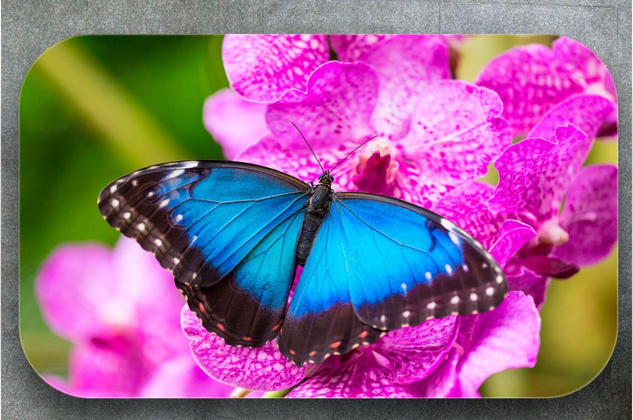 Наклейка на стол - Бабочка Морфо | Купить фотопечать на стол в магазине Интерьерные наклейки