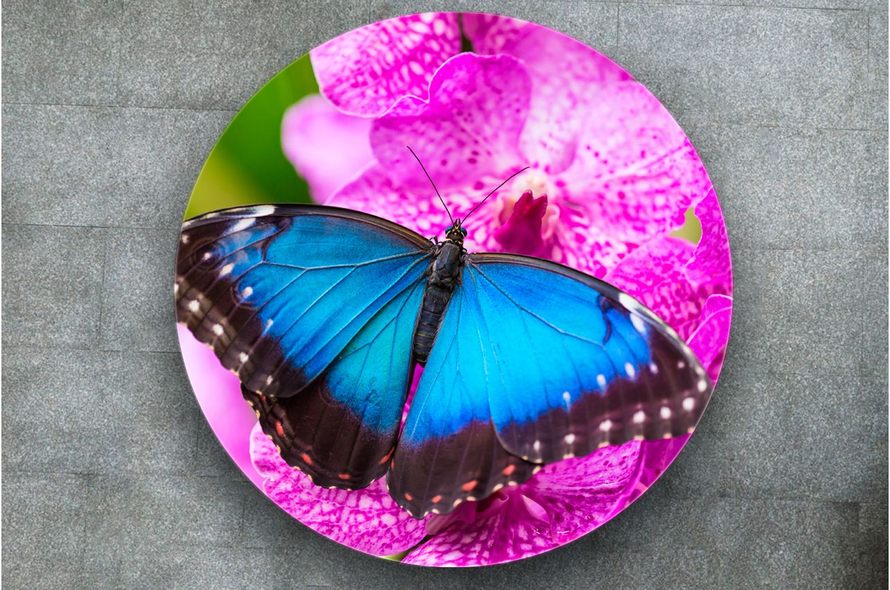 Stickers a Table - Morpho Butterfly |Buy Table Decals in x-decor.com