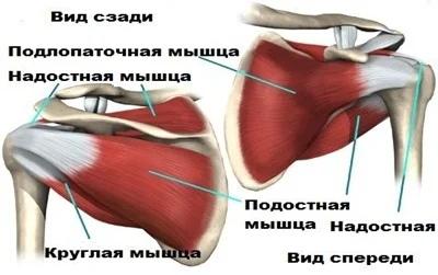 Опасных упражнений не бывает, есть неправильная техника. Спортивная биомеханика, изображение №6