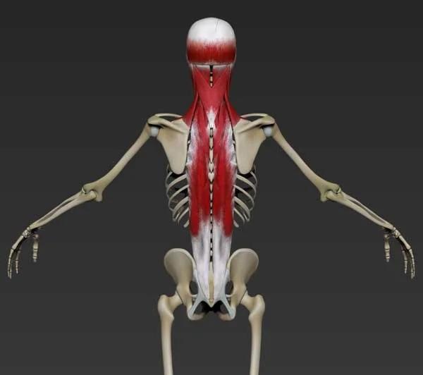 Опасных упражнений не бывает, есть неправильная техника. Спортивная биомеханика, изображение №10