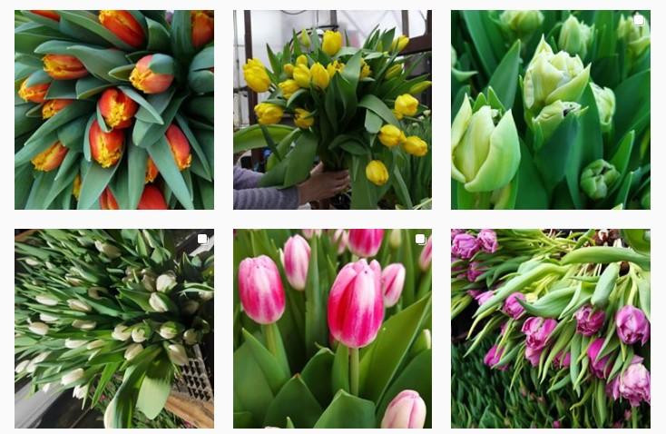 тюльпаны к 8 марта в Нижнем Новгороде
