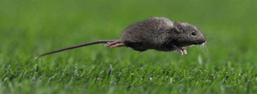 Ультразвуковой отпугиватель для мышей
