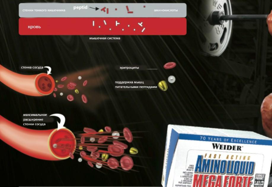 расширение кровеносных сосудов при употреблении Weider Amino Blast Mega Forte