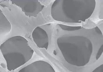 osteobiol_sp_block_microscope1