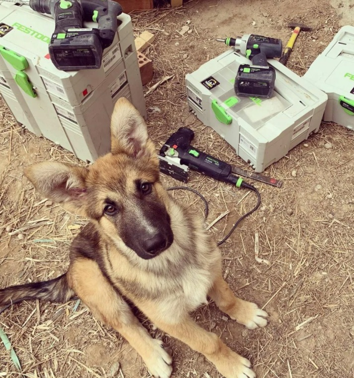 Полезные и занимательные фото с животными