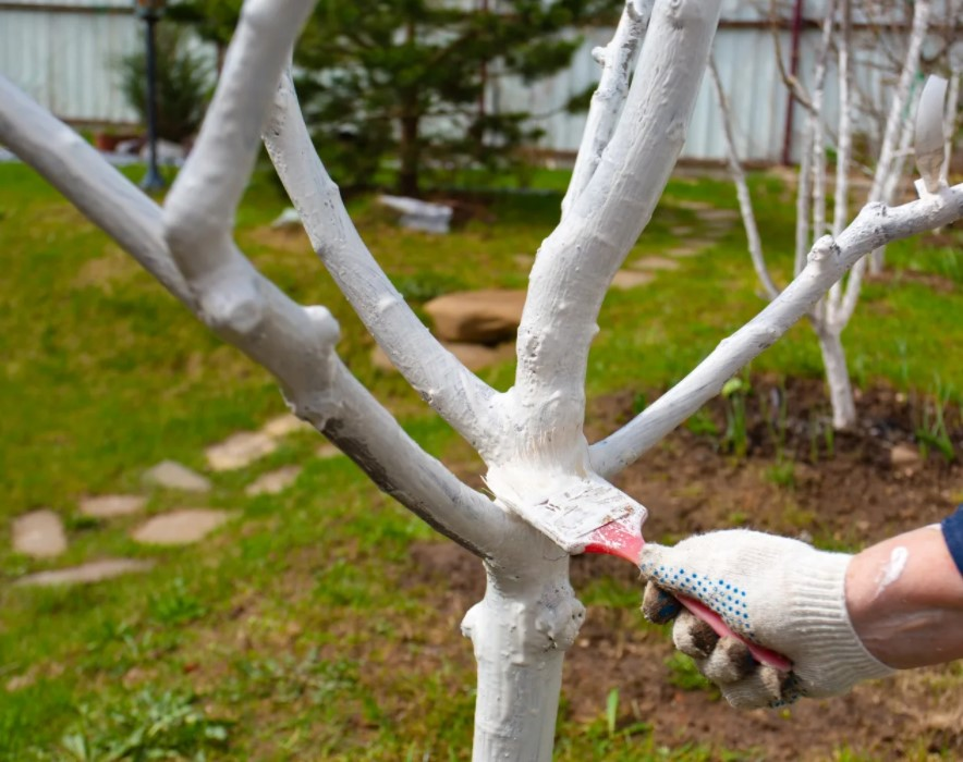 покраска деревьев в саду